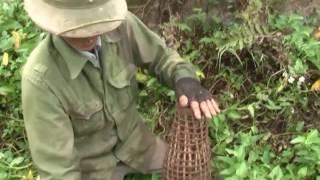 Bắt chuột thôn Cao Xá