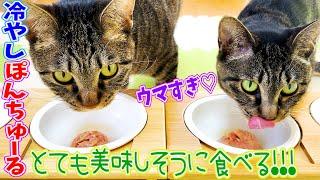 母猫と娘猫に冷やしぽんちゅ〜るをあげたらとても美味しそうに食べました!