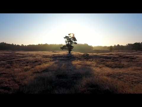 Gintautas Juodagalvis - Nusinešė saulę miškai