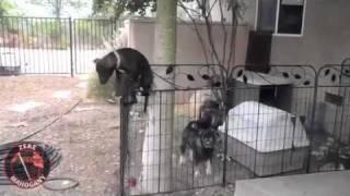 как собаки убегают из вальеров
