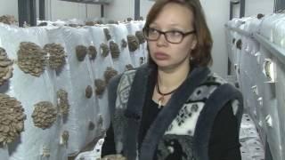 видео veshenka.com.ua • Просмотр темы - Экономика выращивания вешенки