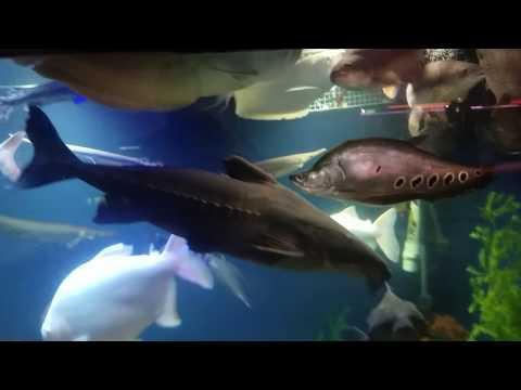 OHIO FISH RESCUE  feeding video
