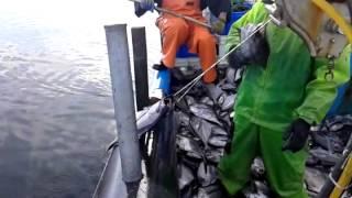 Pesca reinetas Carelmapu Chile agosto 2014
