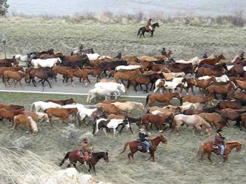 Montana Horses in