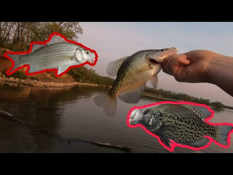 Not So Crappy Crappie Fishing At Lake Evergreen!