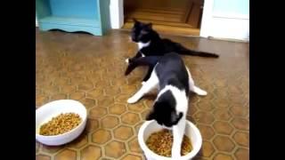 Коты, смешное видео. Приколы. Часть 1. Падения.