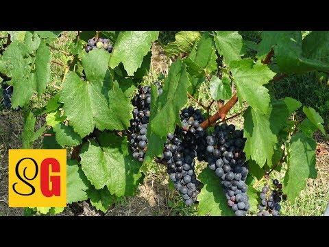Deutscher Wein - Slow German #135