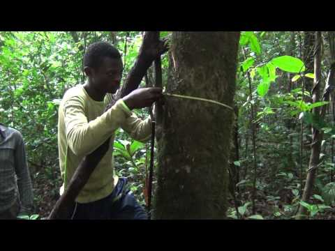 BITC / Biodiversity Inventories - Botanical Field Methods