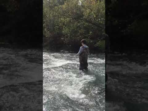 Trout Fishing The River   RidgeLife #Shorts
