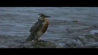 Сильная речь Стивена Сигала из фильма В смертельной опасности