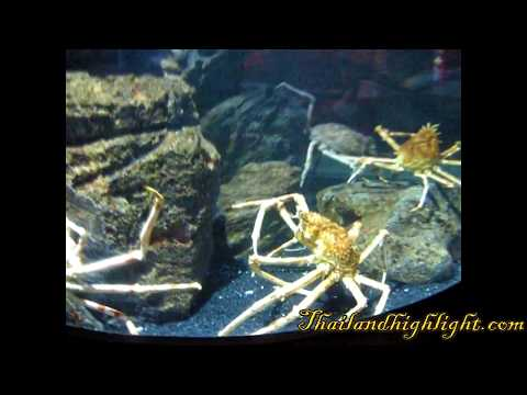 Siam Ocean World Tour Bangkok Sightseeing Tour Thailand