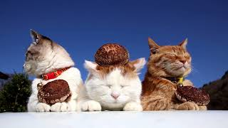原木しいたを乗せた3匹の猫 Shiitake mushrooms 180523 thumbnail
