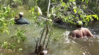 Theo chân thợ săn vào rừng bắt Vạc (animal)