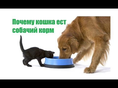 Вопрос: Почему кошка ест корм на полу, вытаскивая его из мисочки?