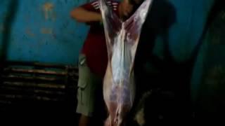 Tutorial cara memotong dan menguliti kambing terbaik daging bersih, tulang dan kulit berkualitas