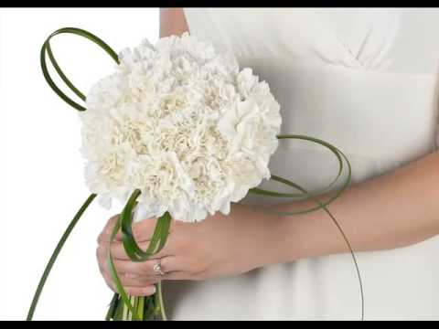 white-carnation-flower-bouquet-beautiful-picture-collection-set-and-ideas