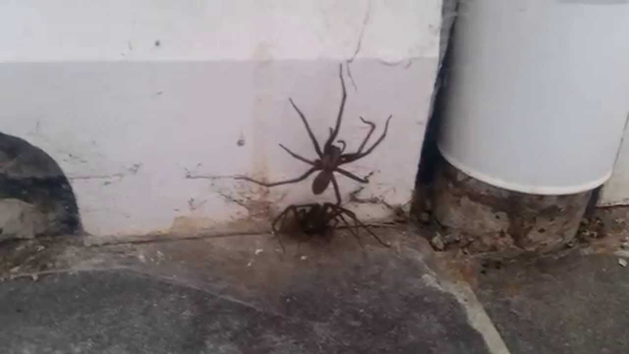 how to make a huge spider