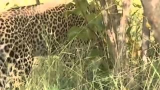 Dziki świat Afryki ,, Safari