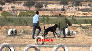 Dog Name / Hulk Breed / Rottweiler  ( Eastwind Training)