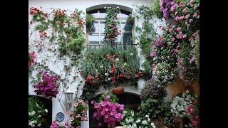 Выставка цветов. Украшаем дом цветами.(Выставка цветов. Украшаем дом цветами. *********В РОЛИКЕ ИСПОЛЬЗОВАНА ЛИЧНАЯ АВТОРСКАЯ СЪЕМКА. Все права защищ..., 2016-04-29T09:20:49.000Z)