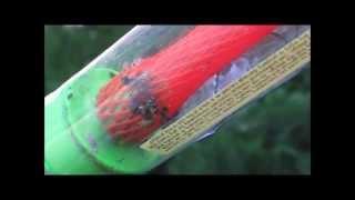 Large wasp nest sucked up 8 23 2014