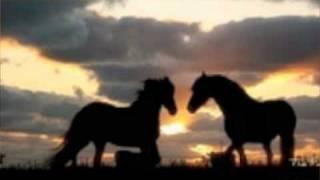 "maria mckee ""the horse life"""