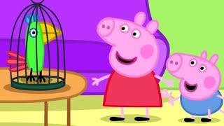 Peppa Pig Português Brasil | Canção do pássaro! | HD | Desenhos Animados