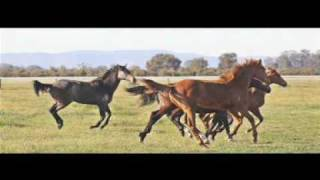 PRINCESS PARK THOROUGHBRED FARM - COX PLATE LUNCH PROMO 2009
