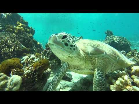 Scuba Diving: Sipidan / Mabul in Borneo 2016 - GOPRO HERO