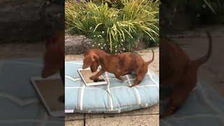 Dog Loves Her Smart Device || ViralHog