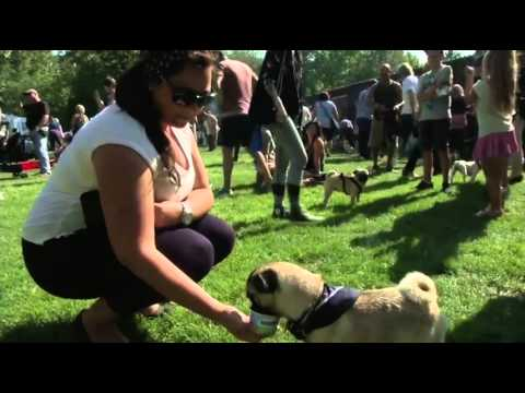 Pug Lovers In Germany Celebrate The Breed