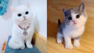 Baby Cats - Cute and Funny Cat Videos Compilation #11 | Aww Animals