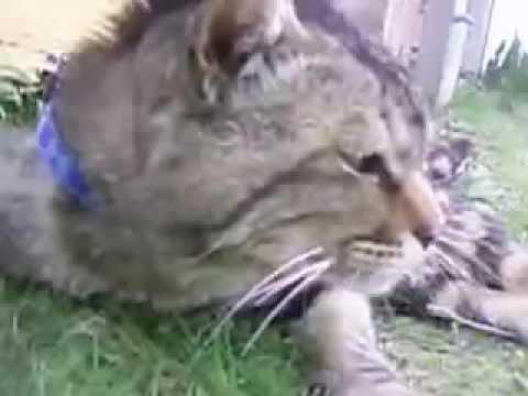 猫パラダイス1 Funny cat videos1 이상한 고양이 동영상1 逗猫视频1   YouTube