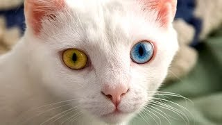 World's WEIRDEST Cat Breeds