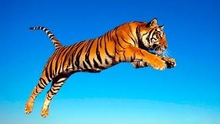 Учим названия диких животных и слушаем их звуки