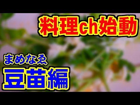 料理ch始動 - 豆苗編