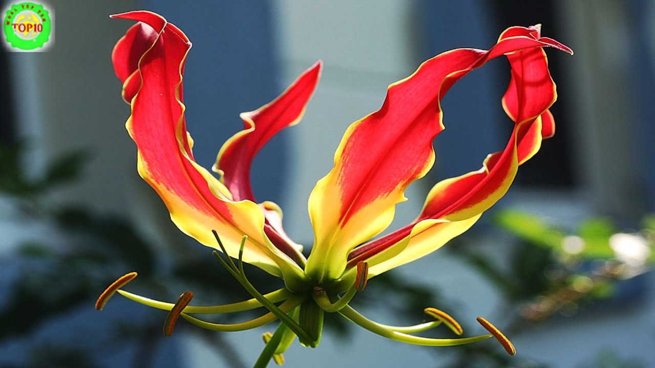 The most expensive flowers in the world. Unusual flowers for a bouquet 87