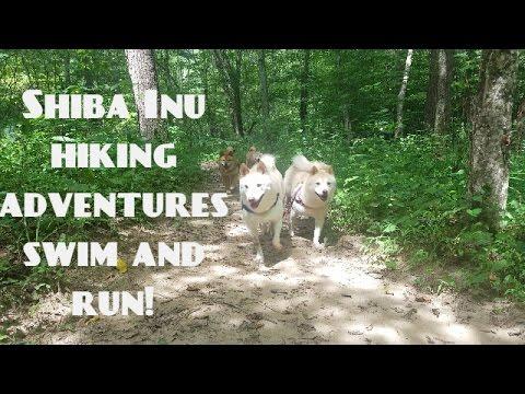 Hiking adventures with Shiba
