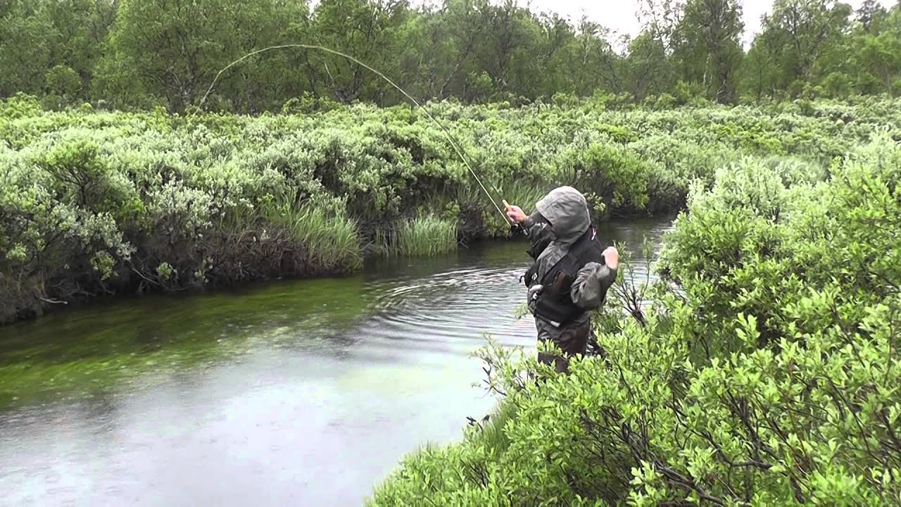 Fly fishing in small creek in norway youtube for Small creek fishing