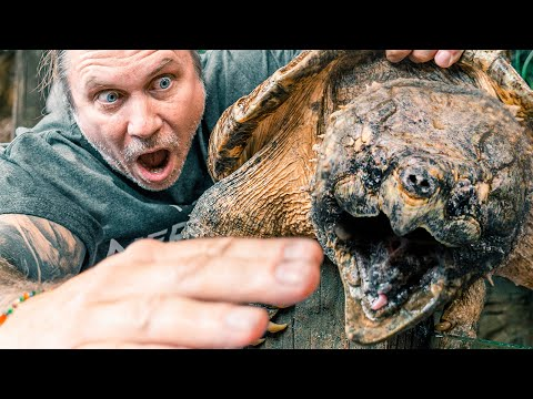 ALLIGATOR SNAPPING TURTLE BITES FINGERS OFF!! | BRIAN BARCZYK