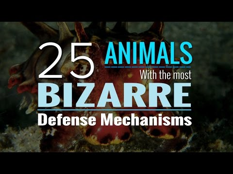 25 Animals With The Most Bizarre Defense Mechanisms You've Ever Seen