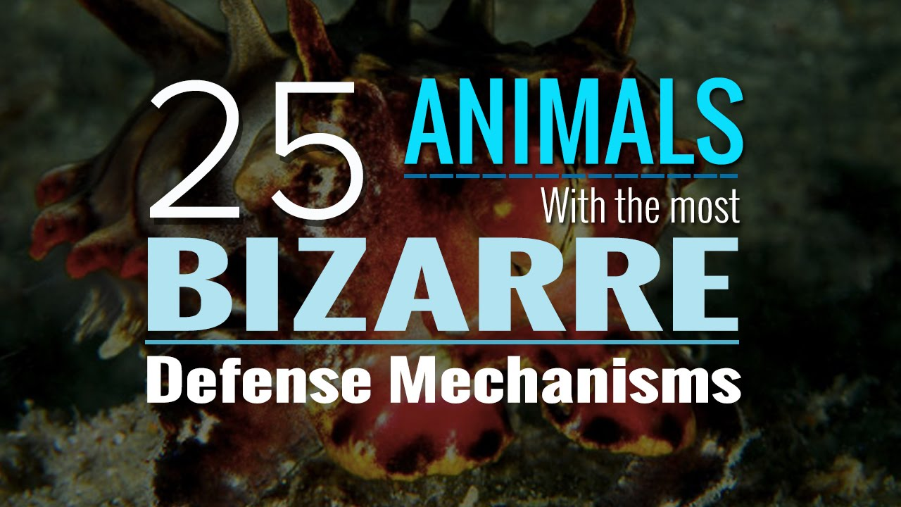 25 animals with the most bizarre defense mechanisms you ve ever seen