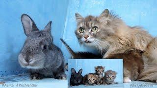 Aelita 2015 Siberian Farm cats, Котята и крольчата Сибирские Деревенские кошки, Часть 1
