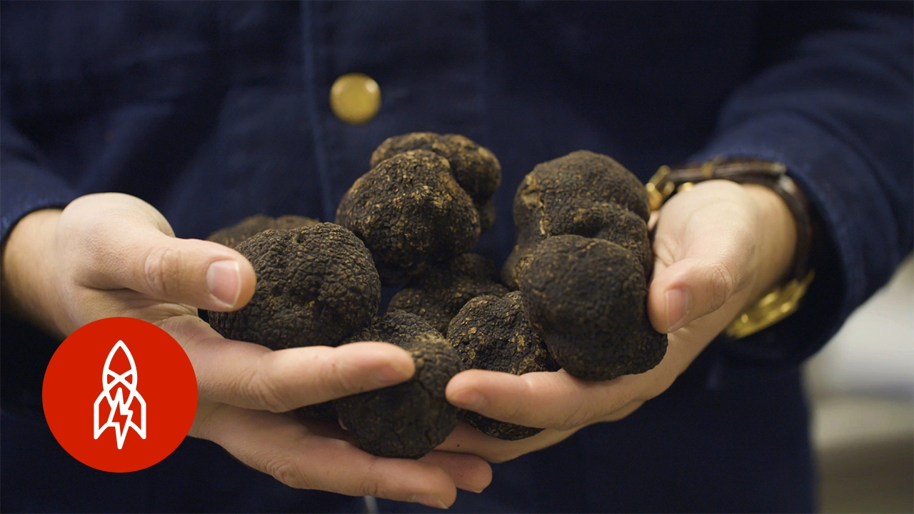 The Truffle Kingpin of New York City - YouTube
