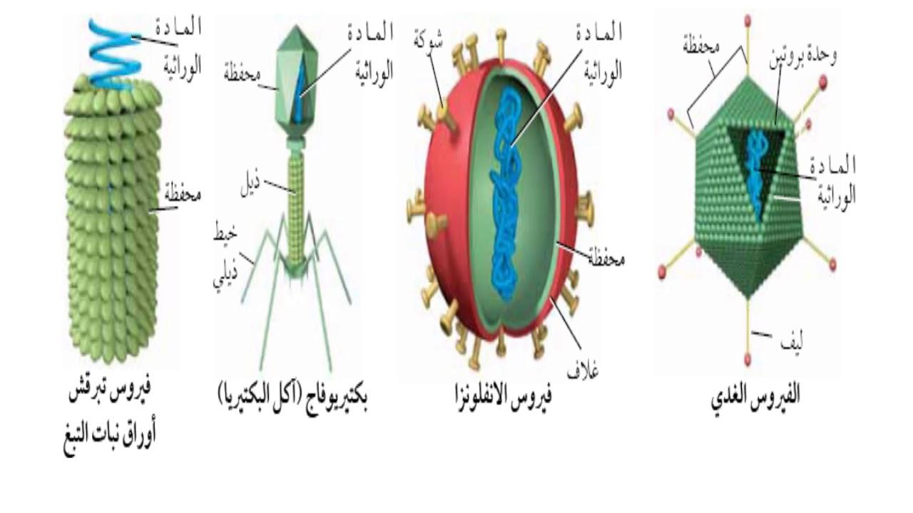 نتيجة بحث الصور عن صف كيف تغير الفيروسات والبريونات وظائف الخليه