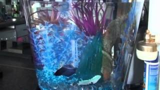My Betta Fish Tank Frozen Themed