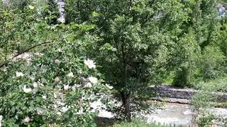 210613 카자흐스탄 메데우(알마티시) 등산