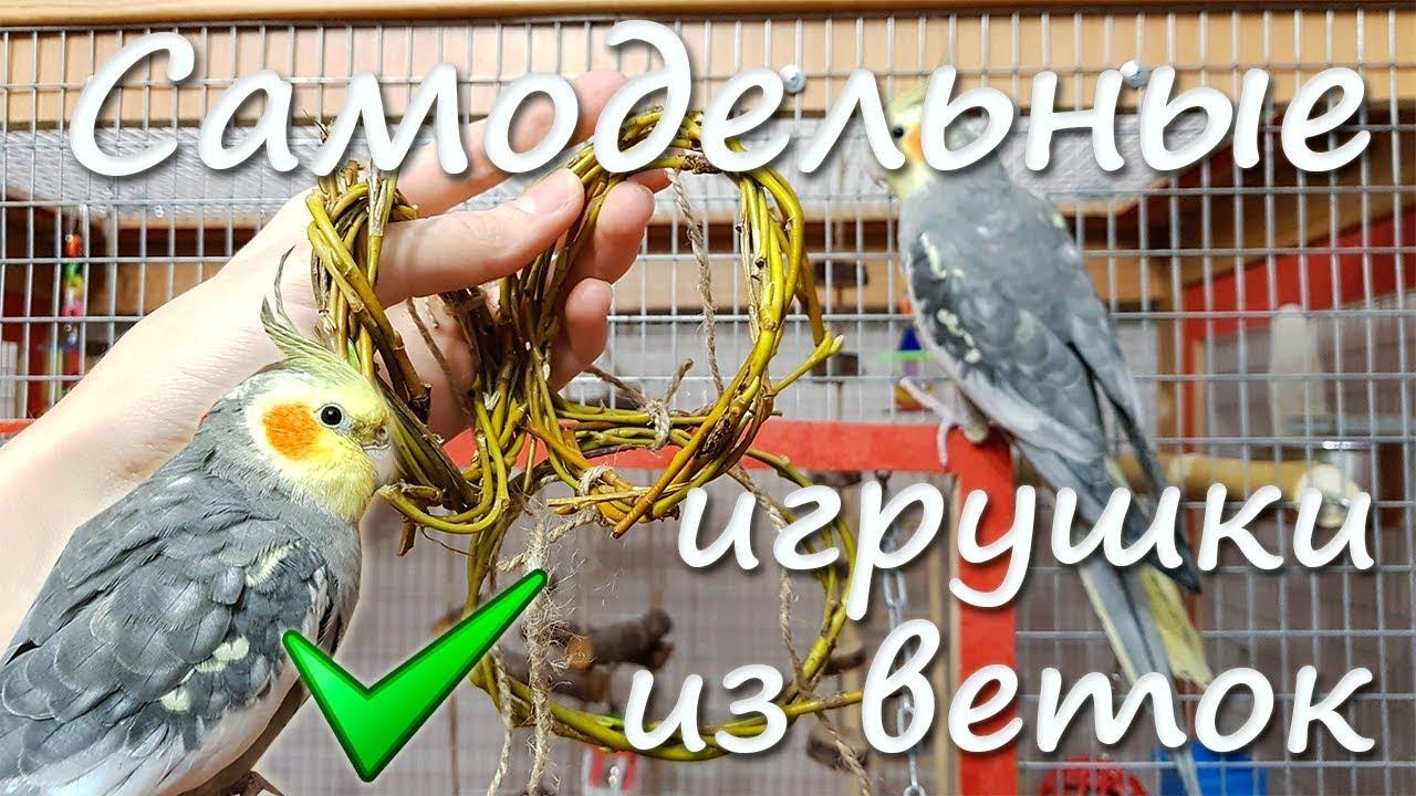 Что можно сделать волнистому попугаю своими руками фото 812