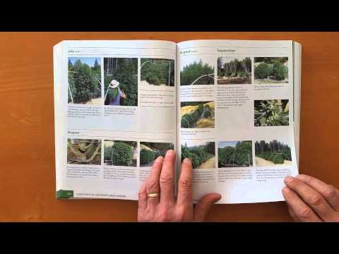 Grow Cannabis – The Cannabis Encyclopedia – by Jorge Cervantes