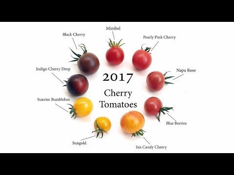 2017 Cherry Tomatoes